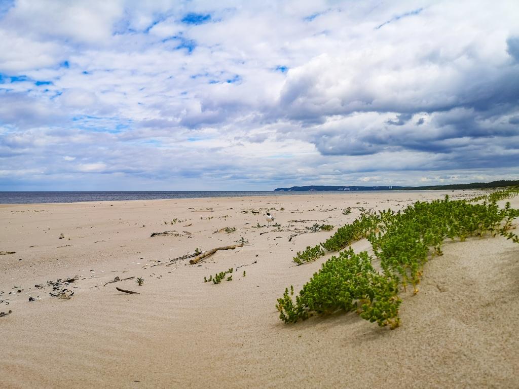 Dzika plaża na wyspie Wolin, Świnoujście.